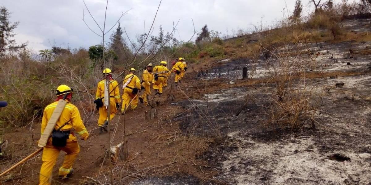 Temporada de incendios forestales ha consumido alrededor de 7 mil hectáreas de bosque