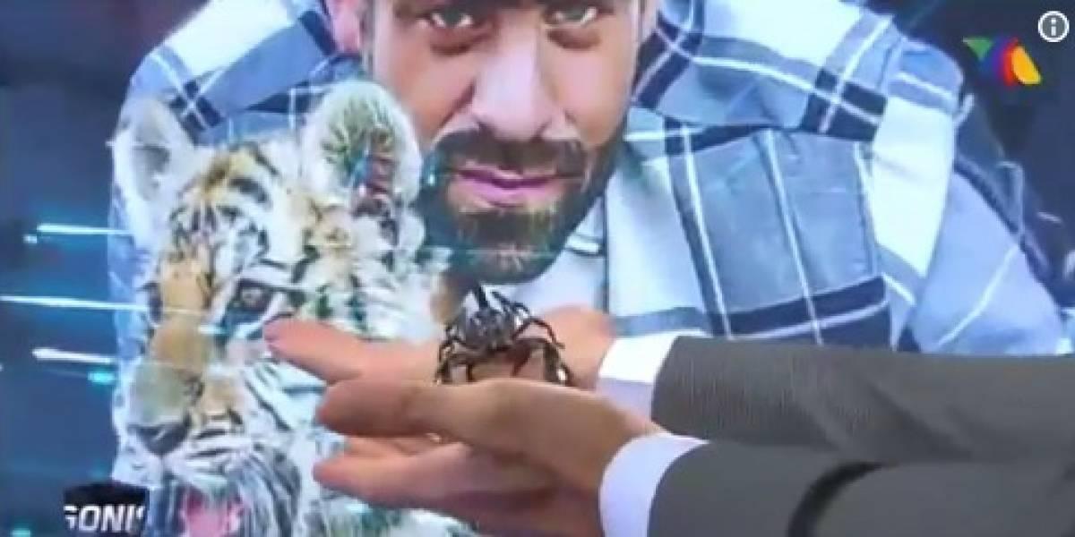 VIDEO: Pitón y escorpión pusieron a temblar a Los Protagonistas