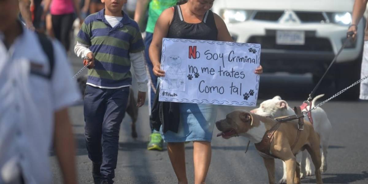 FOTOS. Realizan marcha y con estos mensajes buscan demostrar que los pitbull no son peligrosos