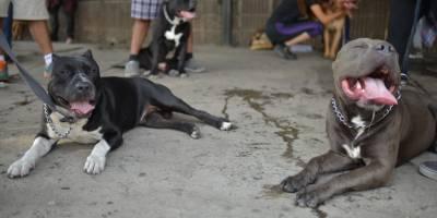 Marcha por los perros pitbull