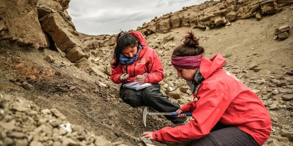 """Hallan restos intactos de dinosaurio en Magallanes: """"Es uno de los más australes y una nueva especie para Chile"""""""