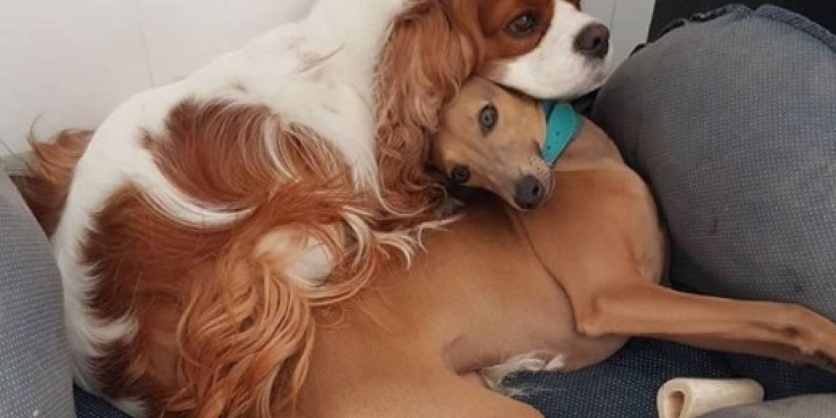 Anitta encanta internet com fotos dos seus cachorros; veja que fofura