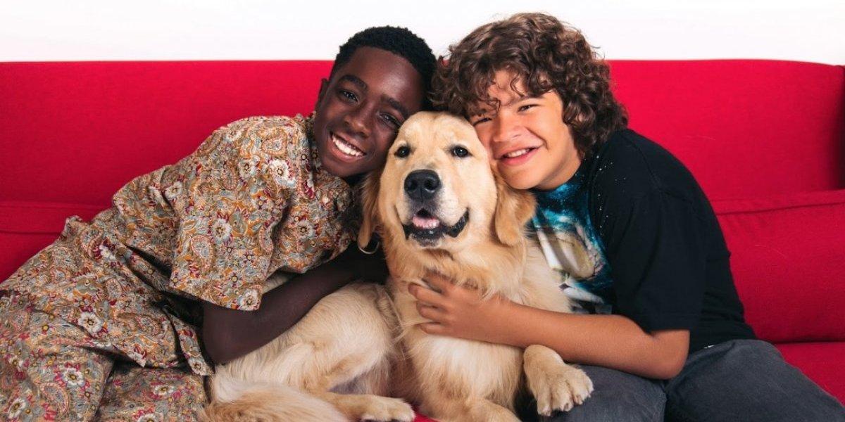 Según Netflix maratonear es mejor con perros (y gatos): el 18% de los chilenos crea un perfil exclusivo para su mascota