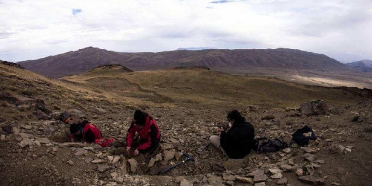 Descubren dinosaurio semiarticulado en la región chilena de Magallanes