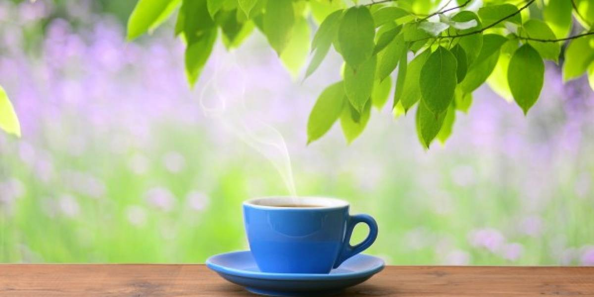 Estudo aponta que chá preto pode ajudar o ganho de massa magra