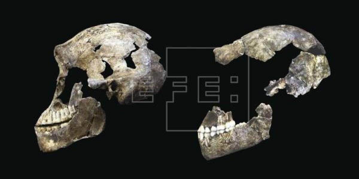 Primeros Homo sapiens llegaron a Arabia, más lejos de lo que se pensaba
