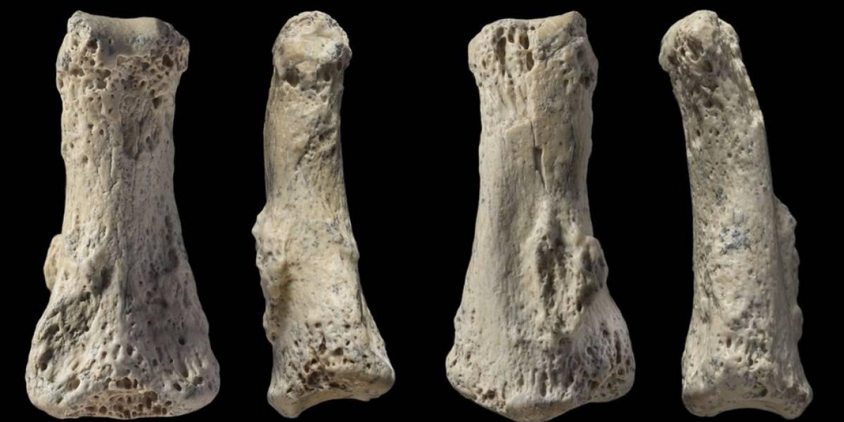 Osso de 3 cm aponta que humanos saíram da África bem antes do que se pensava