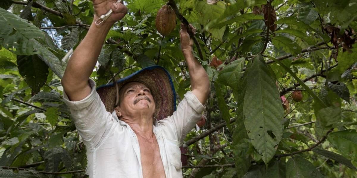 """""""Sí se puede garantizar el derecho a la alimentación en Colombia"""": Rafael Zavala, representante de la FAO en Colombia"""