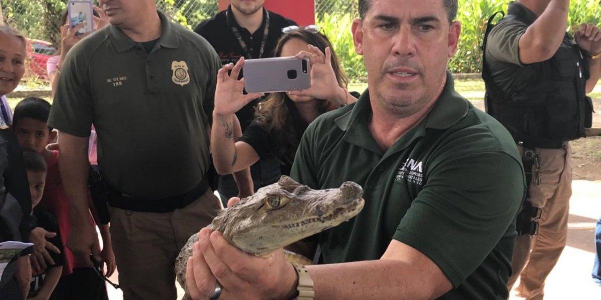 Toman acción ante avistamientos de caimanes en río La Plata