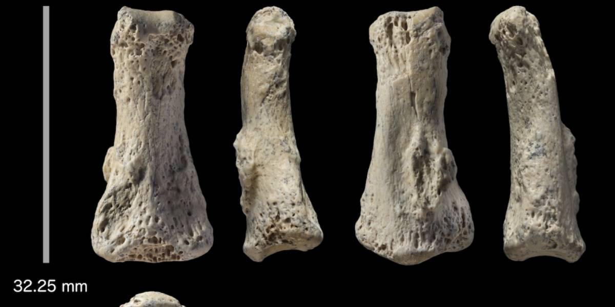 El hallazgo de un dedo fosilizado está a punto de cambiar la historia de la humanidad