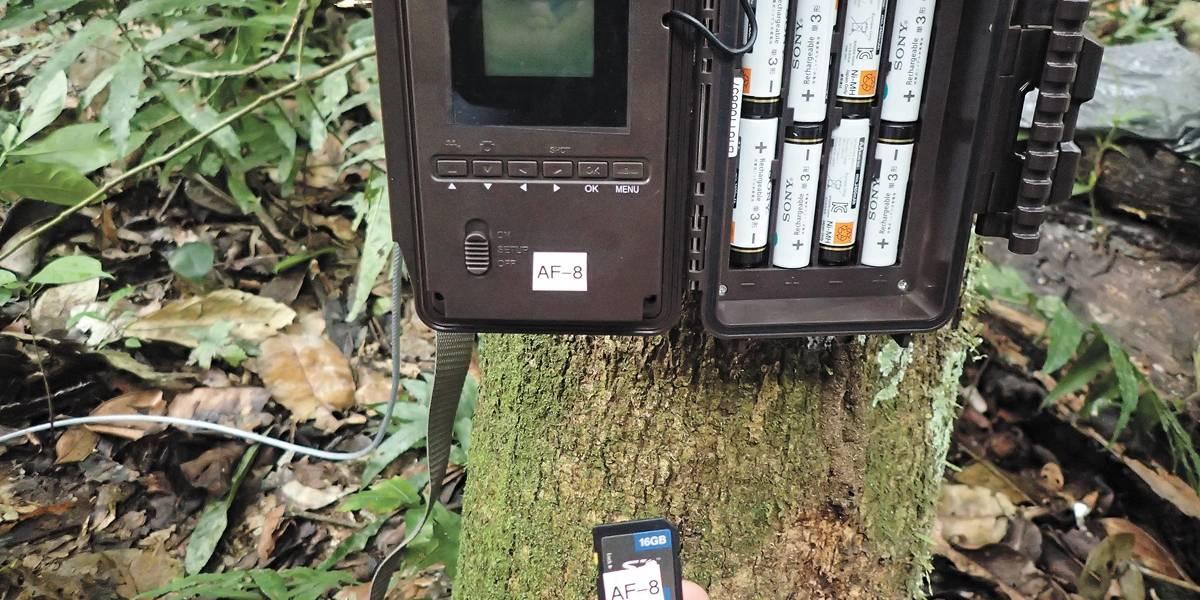 Monitoramento ajuda ONG a observar animais selvagens em área de exploração de madeira