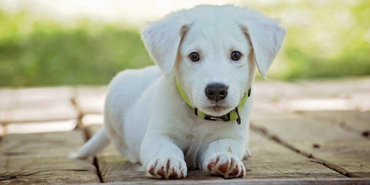 Tips para cuidar a tu mascota en temporada de calor