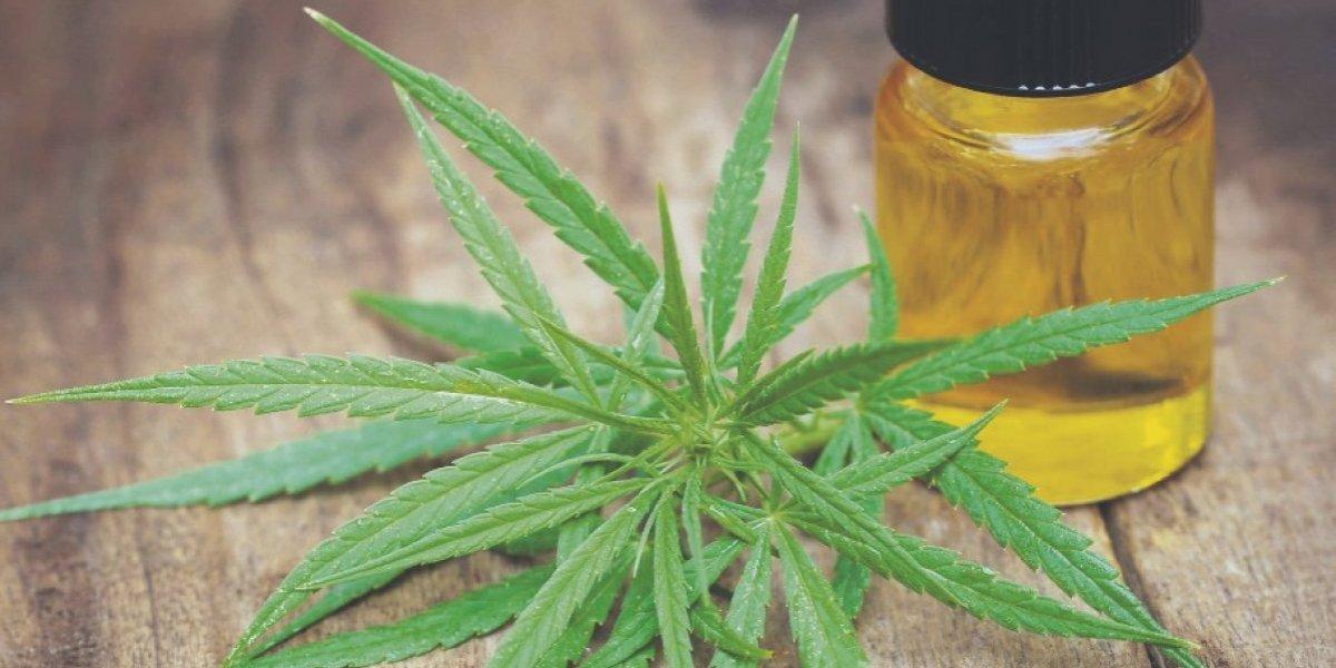 Aprueban reglamento para el cannabis medicinal en Puerto Rico