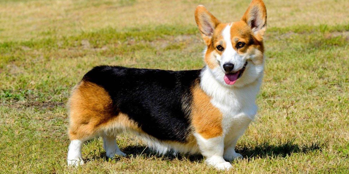 Mata perro del vecino porque ladraba mucho