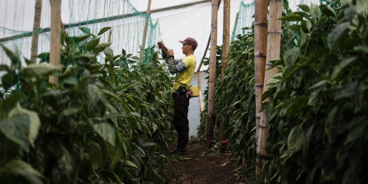 Quienes generen empleo en el campo no pagarían impuestos durante 10 años