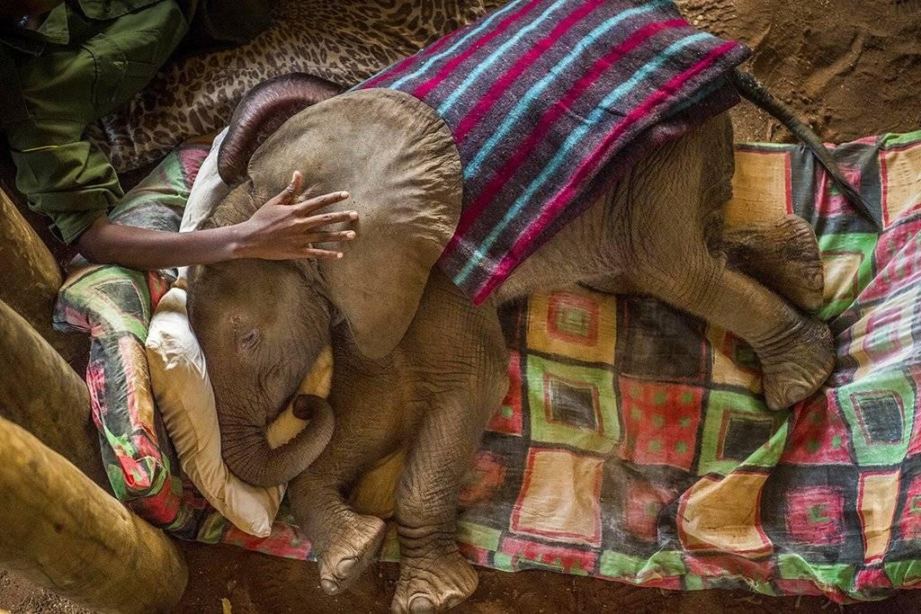 """Warriors Who Once Feared Elephants Now Protect Them"" de Ami Vitale, ganadora de la categoría Nature stories. Crédito: Ami Vitale for National Geographic, World Press Photo via AP"