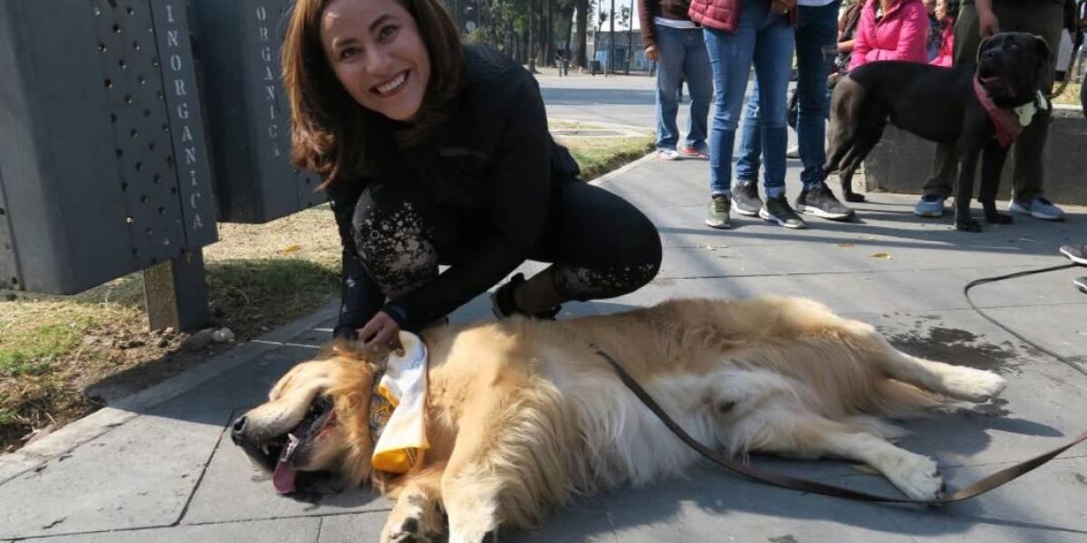 Advierten de sopreboplación de mascotas en Iztapalapa