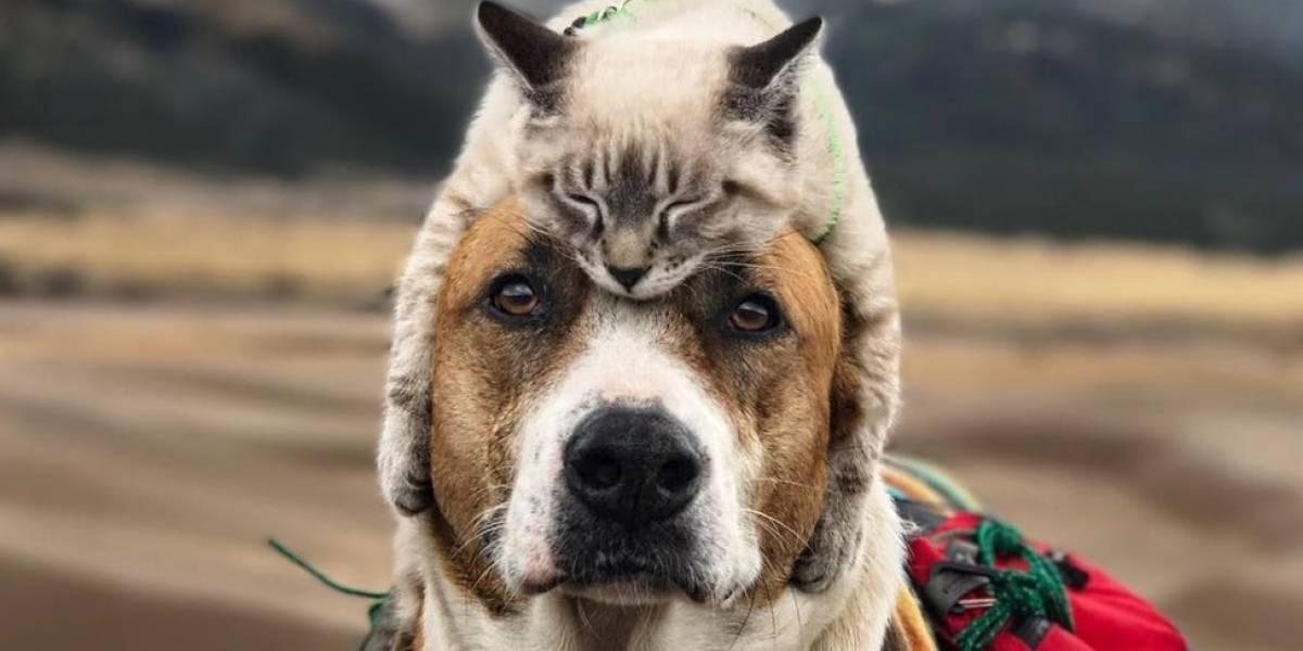 """Gato e cachorro viram """"melhores amigos"""" e fazem viagens juntos por montanhas dos EUA"""