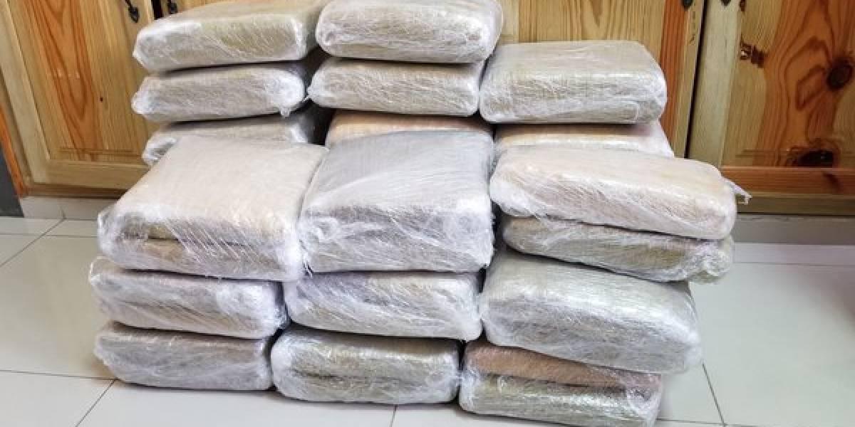 Ocupan 332 libras de marihuana en Independencia y Distrito Nacional
