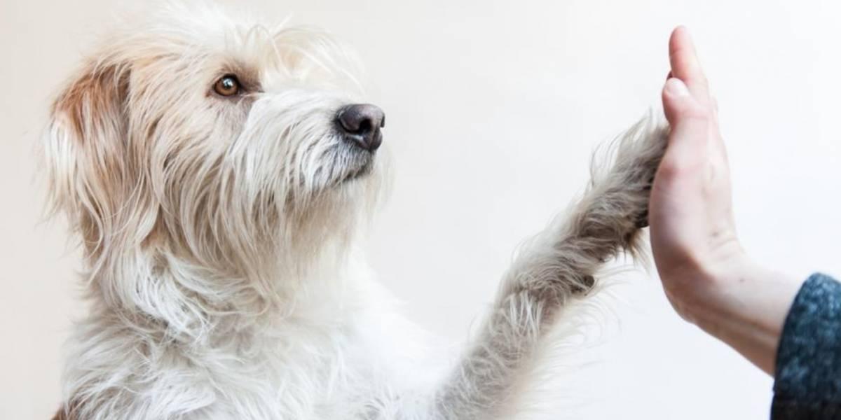 Quiz ¿Qué tanto conoce a su perro?