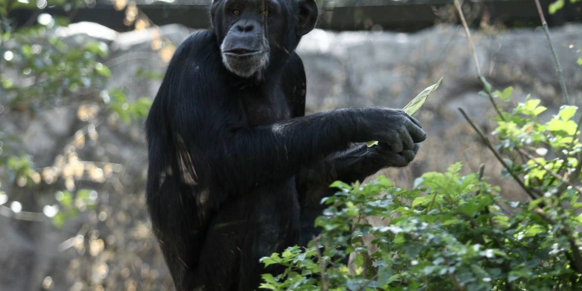 Sedema rechaza dar información sobre autopsias en zoológicos de la CDMX