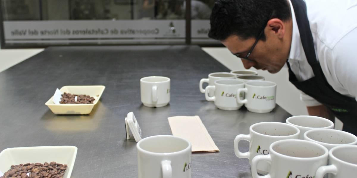 Café vallecaucano ganó un importante premio internacional