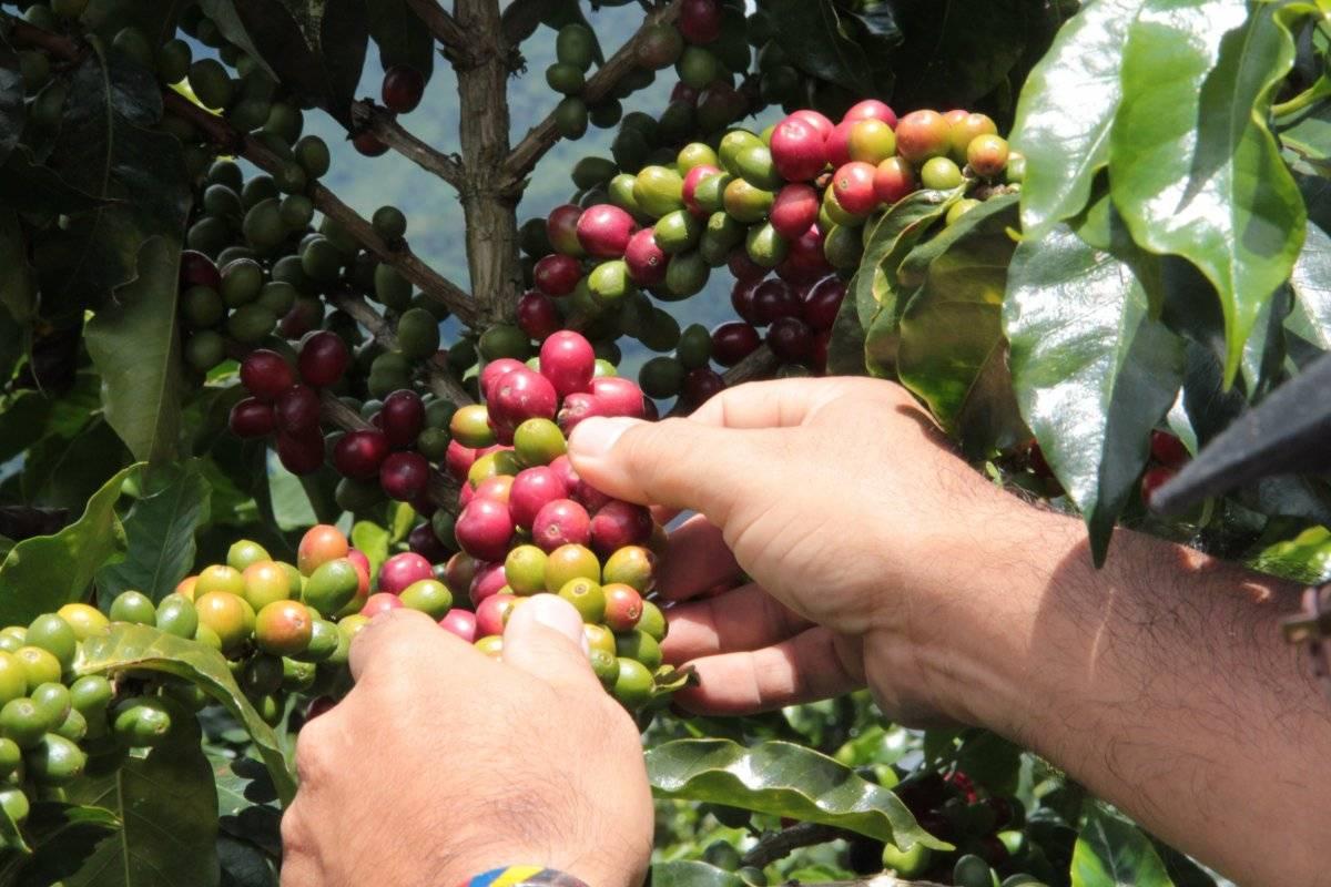 Café Valle del Cauca