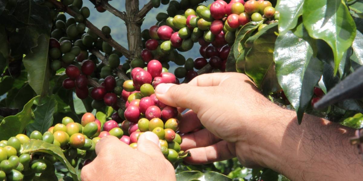 Rinden homenaje a los caficultores de Colombia en el Día Nacional del Café