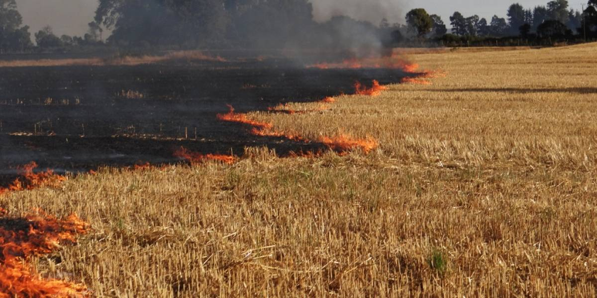 Crean en La Araucanía innovador software para visualizar quemas agrícolas y forestales