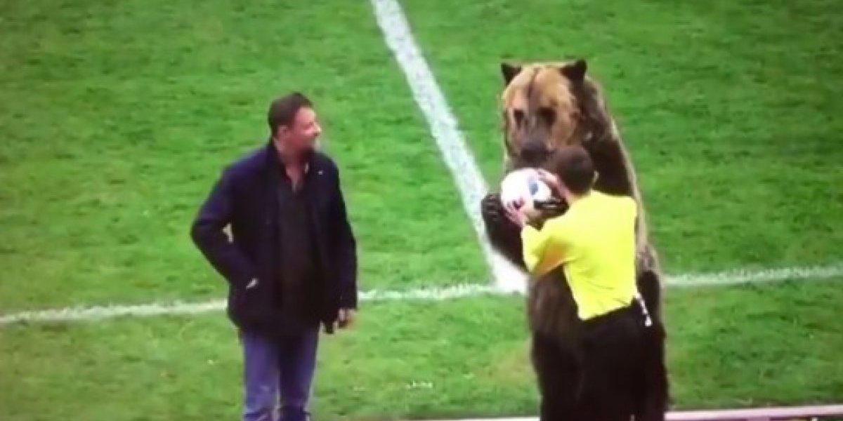 VIDEO: Oso entrega balón al árbitro previo a un partido