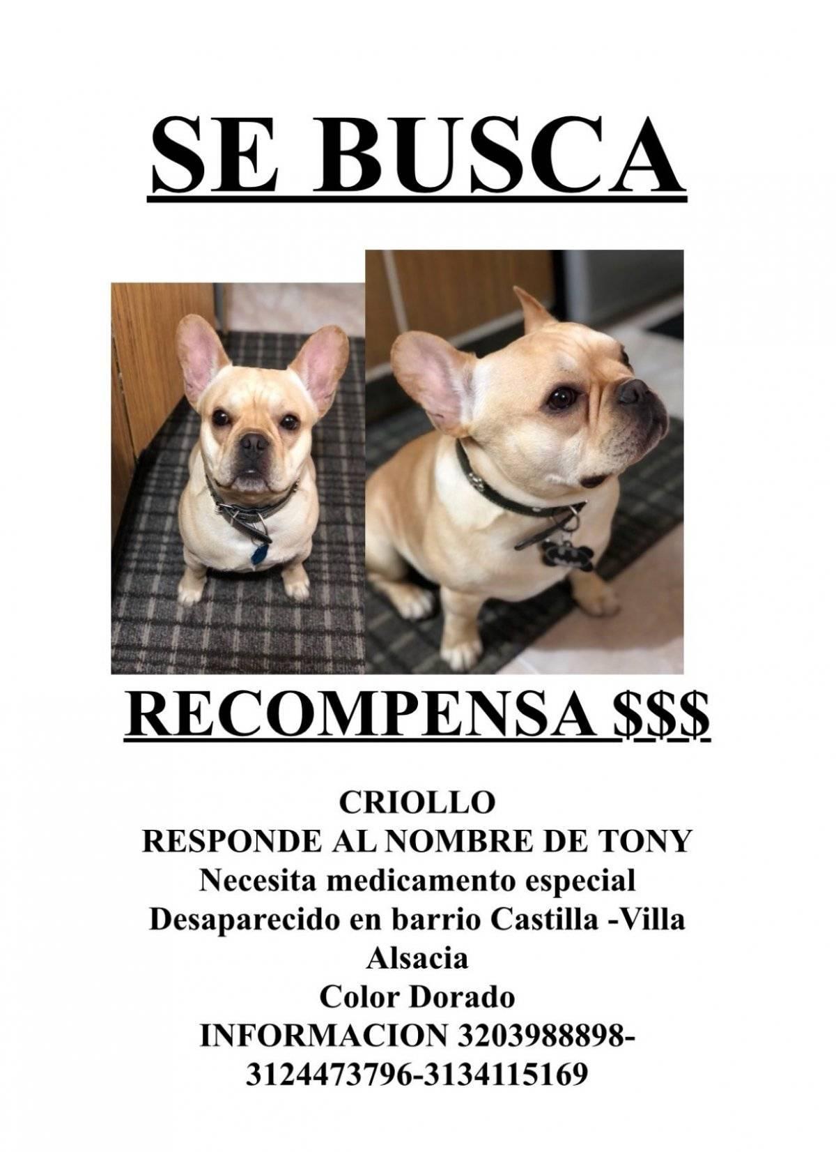 perro perdido en Bogotá perro perdido en Bogotá