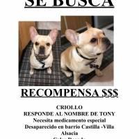 perro perdido en Bogotá