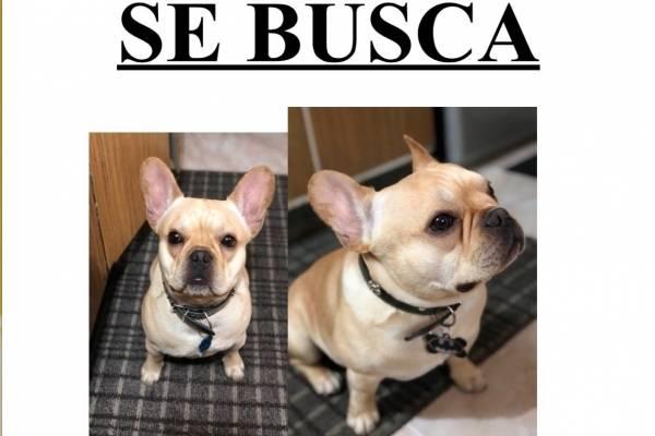 perros perdidos en Bogotá