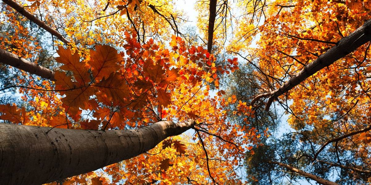 Consejos para tomar fotografías en otoño y capturar sus particulares colores