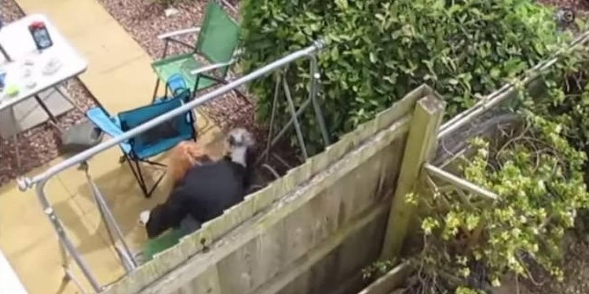 VIDEO: Mujer azota a perro contra el piso por tirar su café