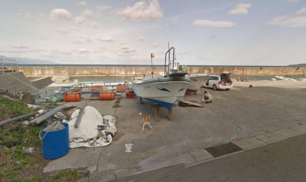 Google View Perro