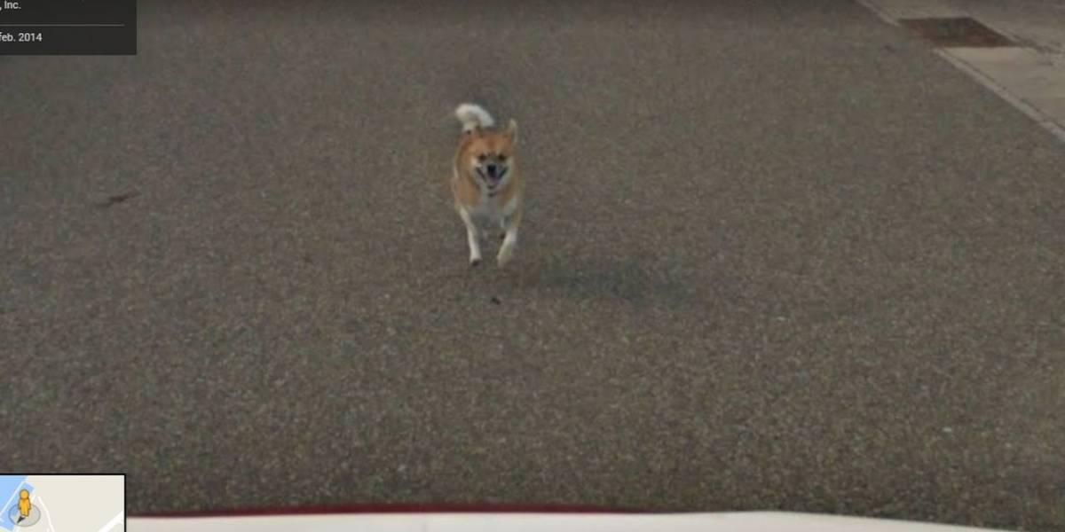 Un perro se convirtió en sensación viral por perseguir el auto de Google Street View