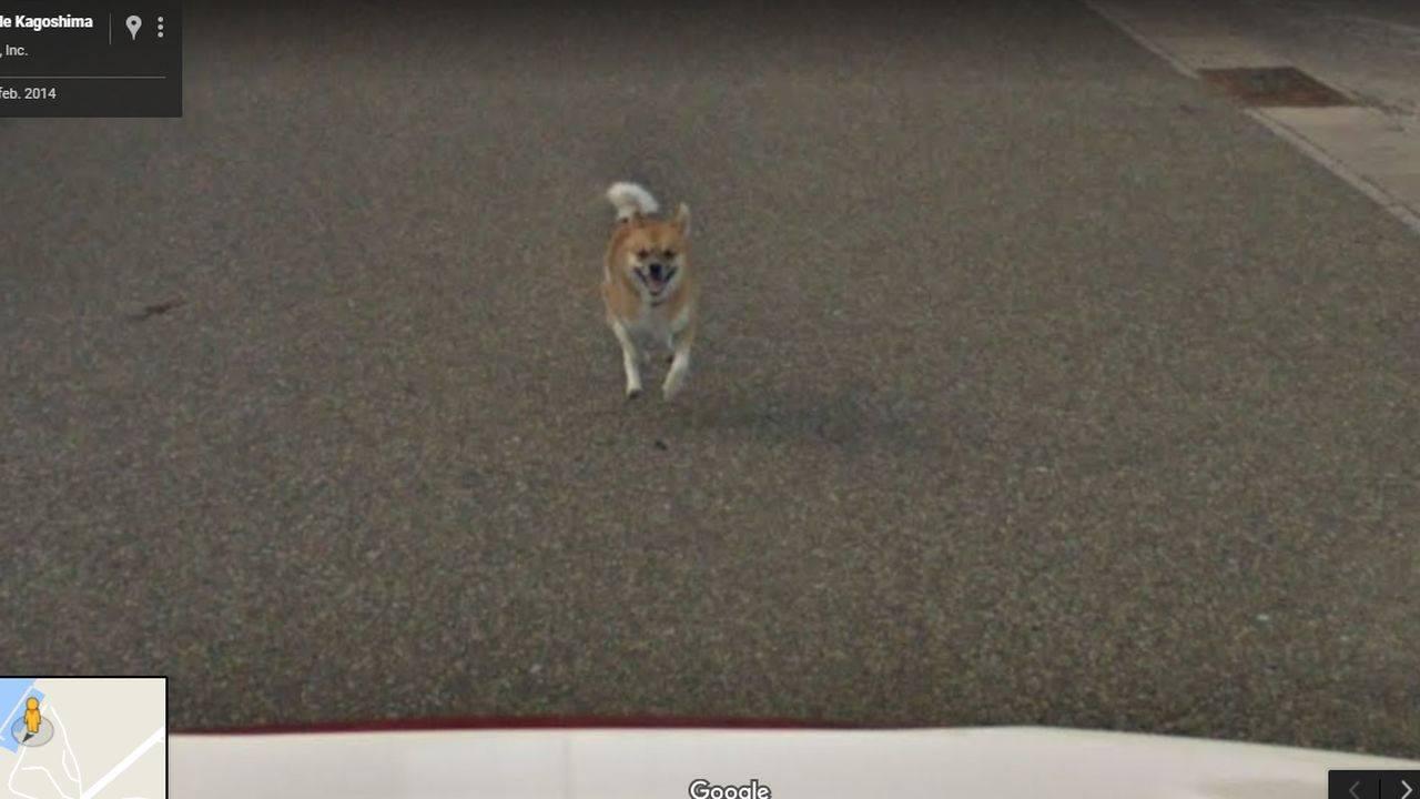 Street View Perro