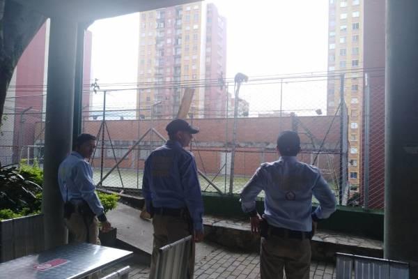 Zarigüeya rescatada en Medellín