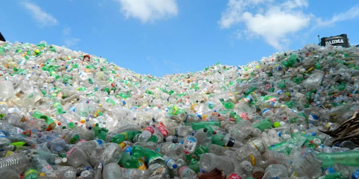 El error científico que puede salvar al mundo: la historia de la bacteria mutante capaz de devorar toneladas de plástico