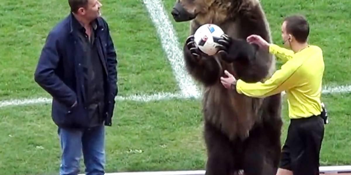 Critican empleo de oso antes de partido de fútbol en Rusia