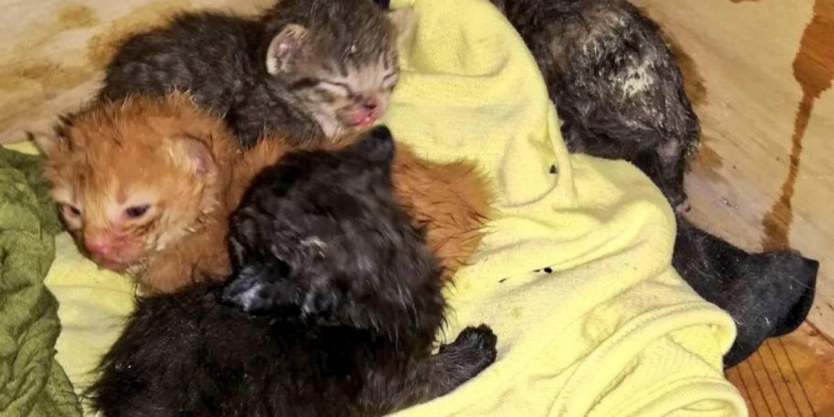Quito: Bomberos rescatan a cuatro gatos que quedaron atrapados en conato de incendio estructural