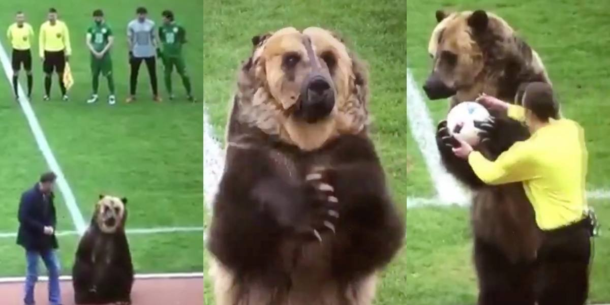 Indignación por maltrato animal provoca video de un oso en juego de futbol