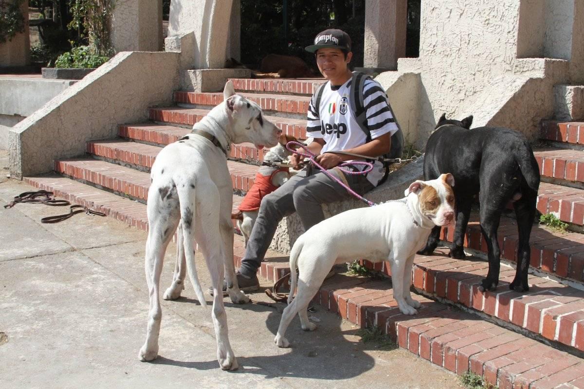 paseadoresdeperros-33db64a10811eb6e51ee1d4923da2263.jpg