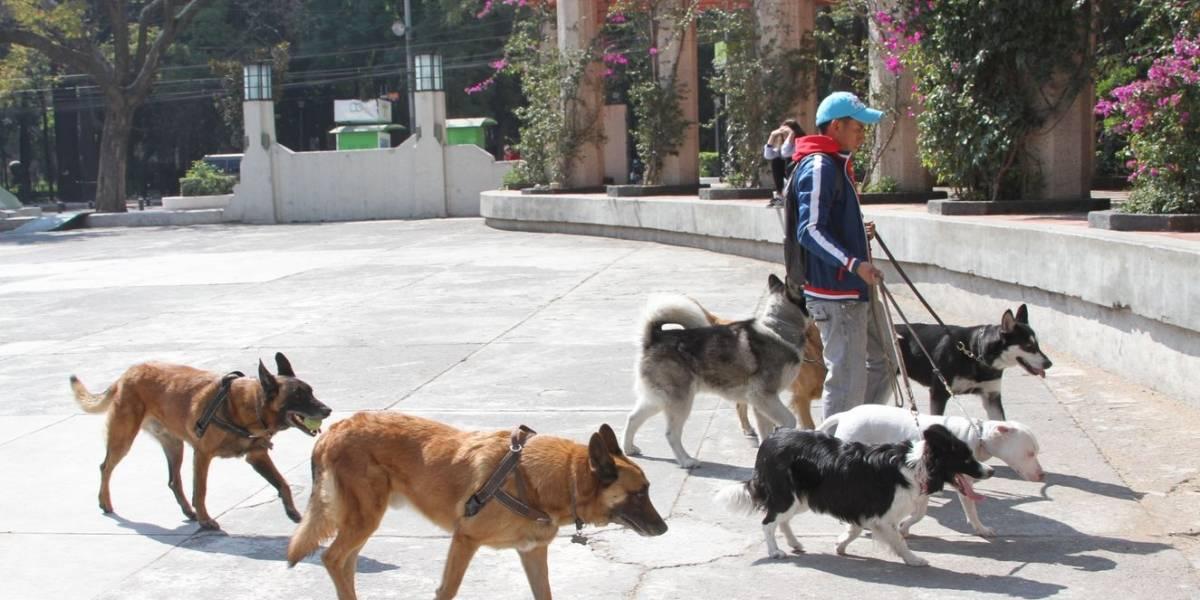 Paseadores de perros ganan como un profesionista y trabajan menos
