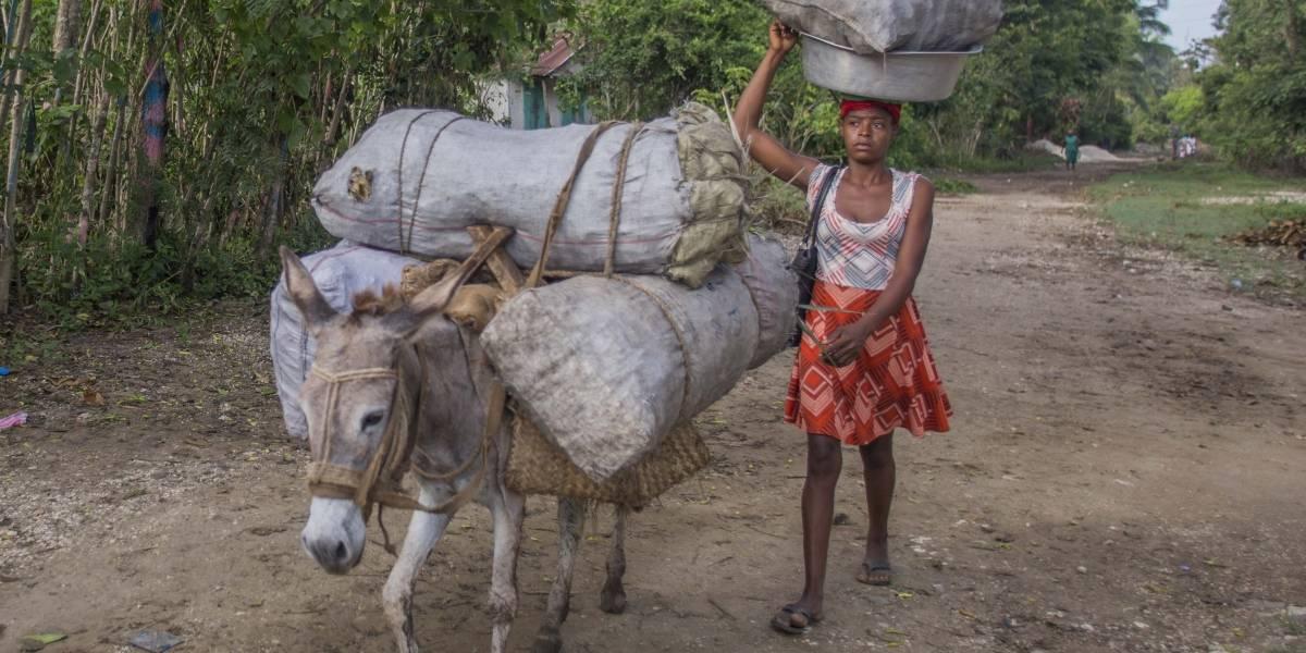 Carbón de leña, el negocio de la vergüenza que genera millones de dólares en Haití y acelera el cambio climático