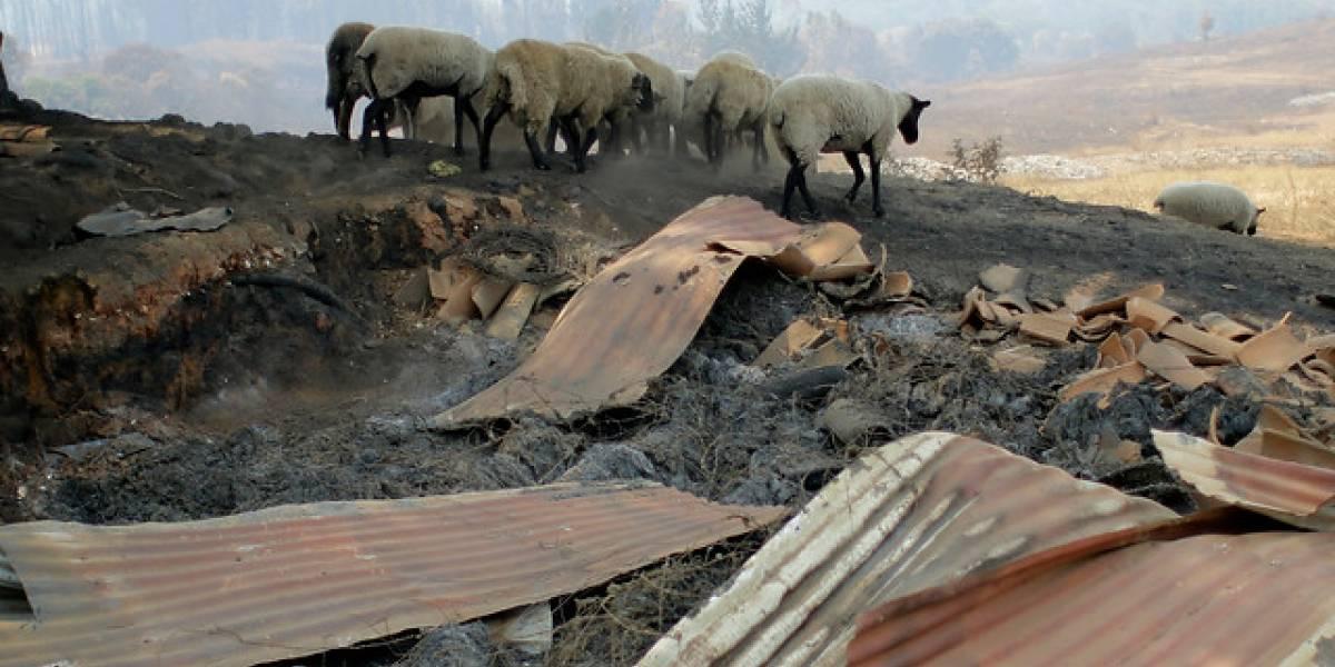 Incendios forestales dejan 6.162 damnificados y 1.551 viviendas destruidas