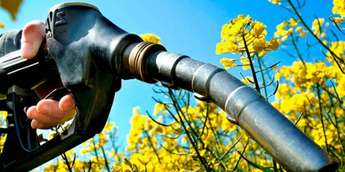 Crean combustible ecológico de 100 octanos