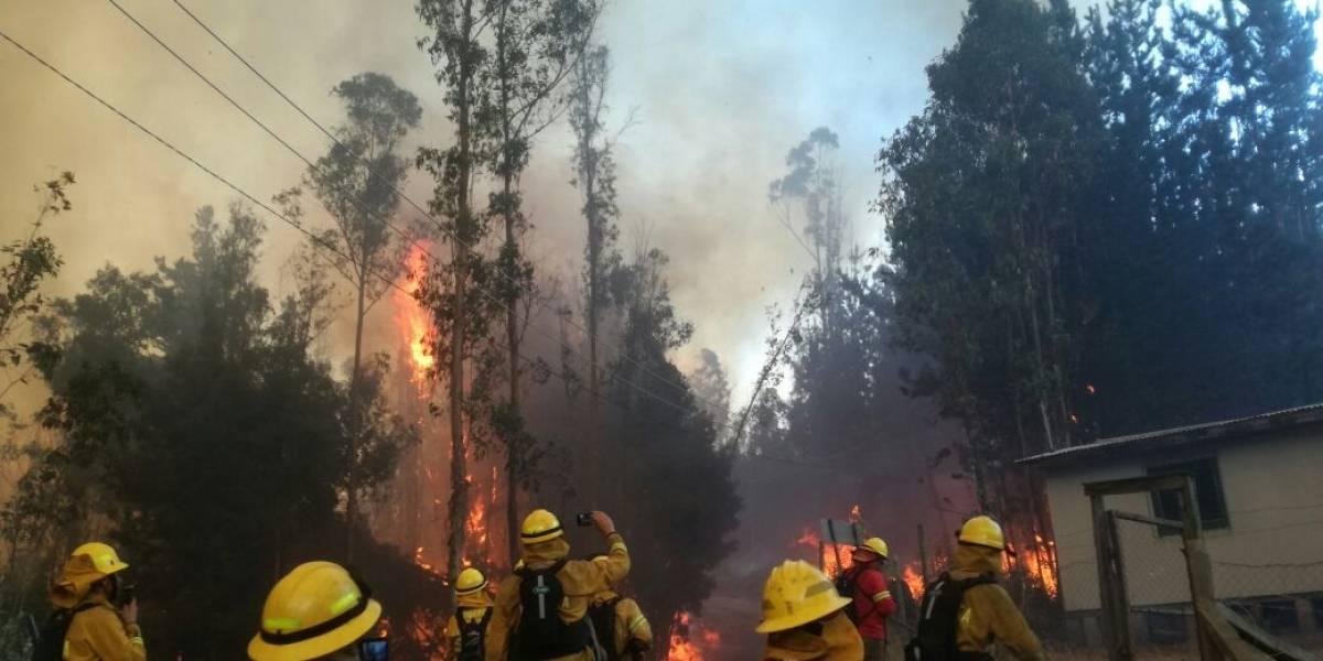 Incendios forestales: la historia de los 30 brigadistas colombianos que luchan contra el fuego en la región del Biobío