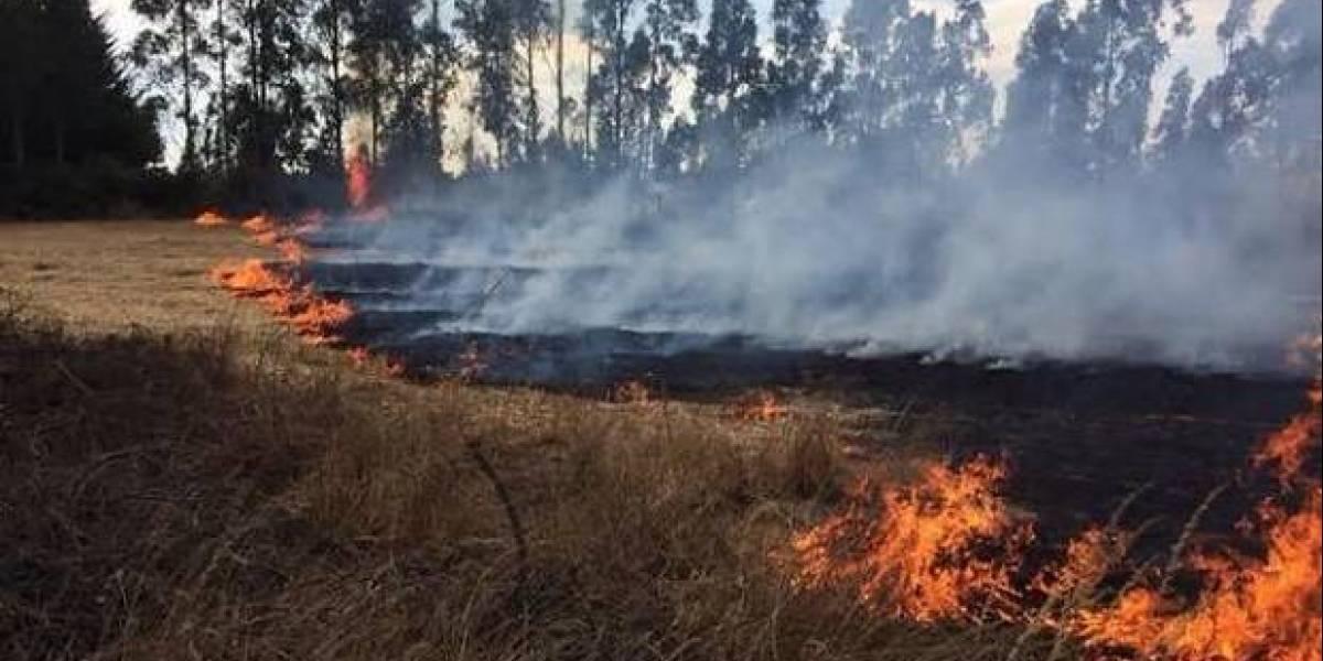 Junaeb entregará útiles escolares a estudiantes de zonas afectadas por incendios forestales